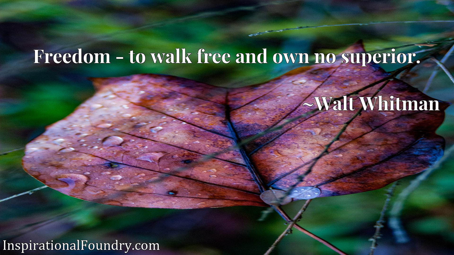 Quote Picture :Freedom - to walk free and own no superior.