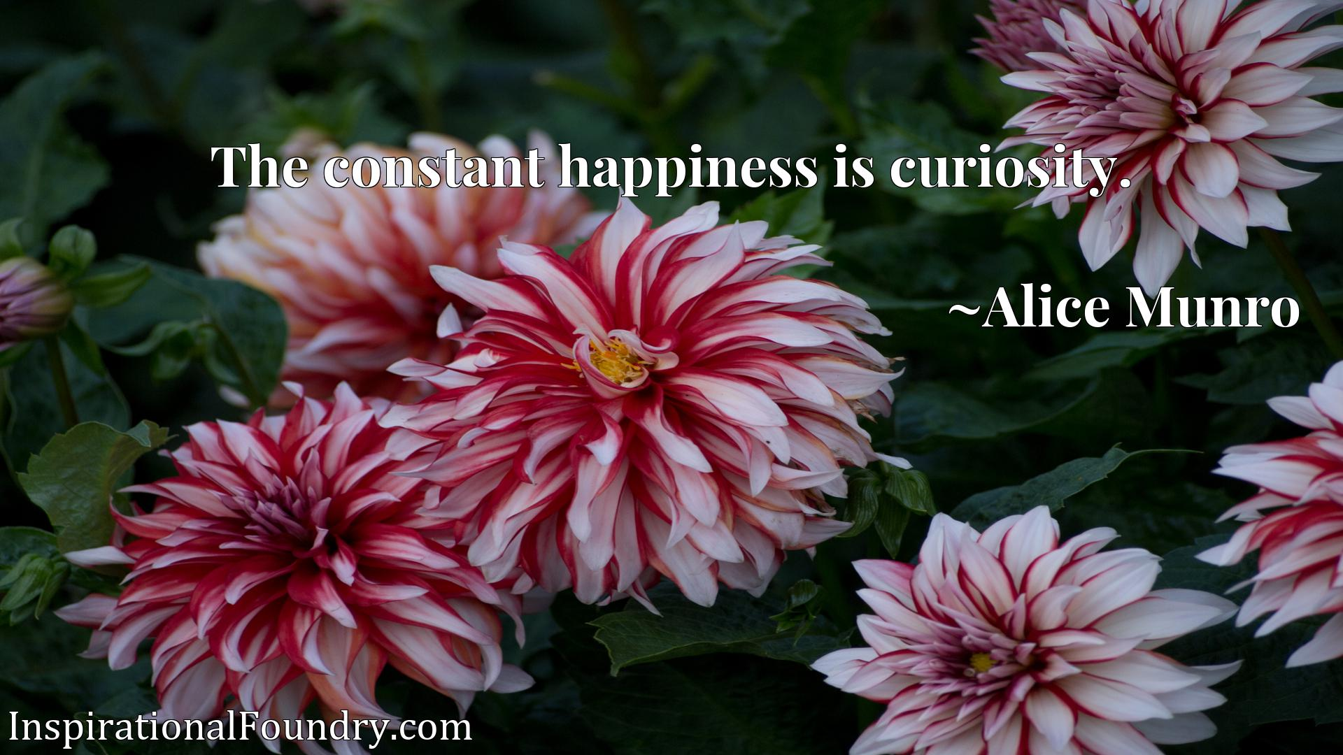 Quote Picture :The constant happiness is curiosity.