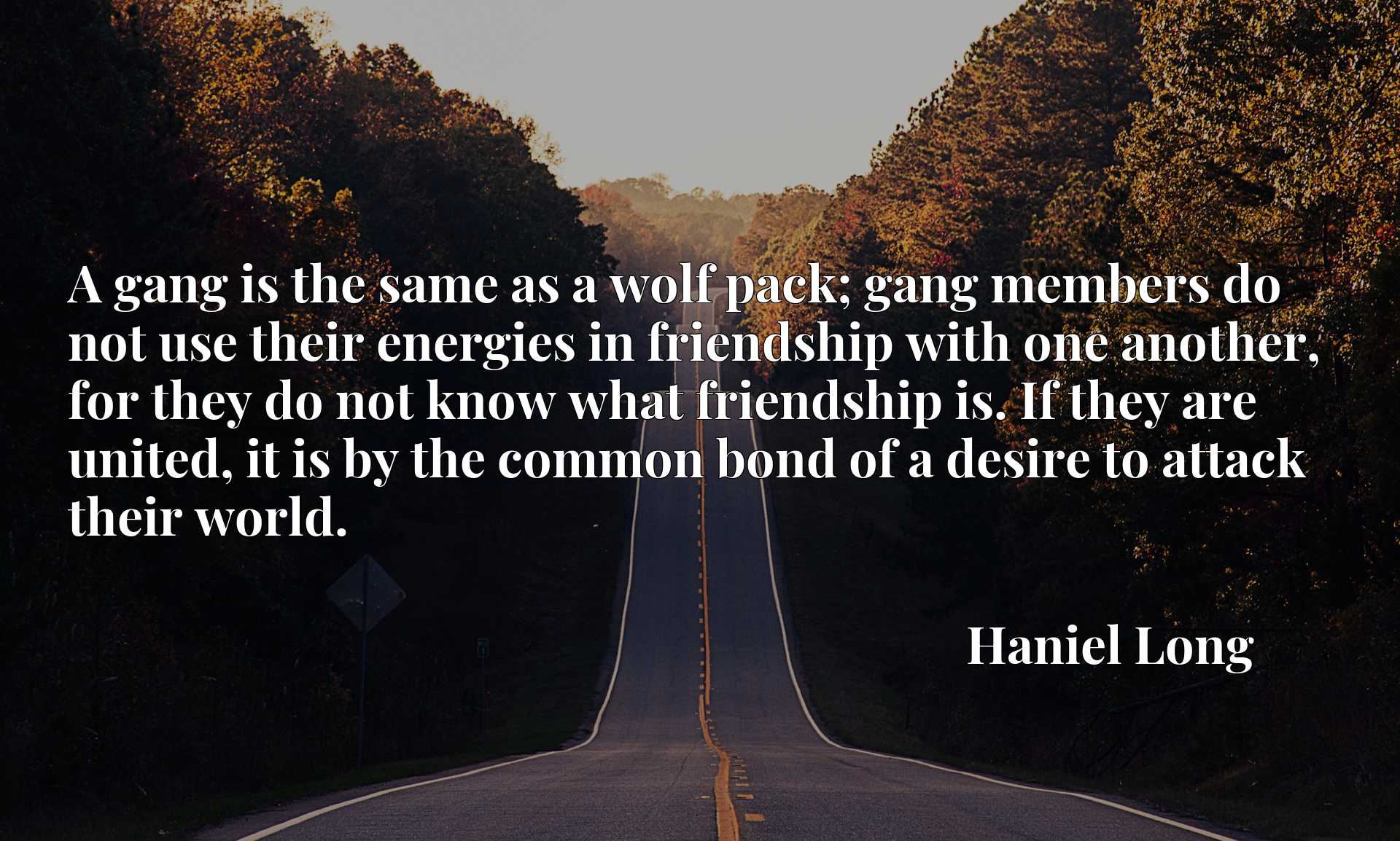 A gang is the same as a wolf pack; gang members do not use their energies in friendship with one another, for they do not know what friendship is. If they are united, it is by the common bond of a desire to attack their world.