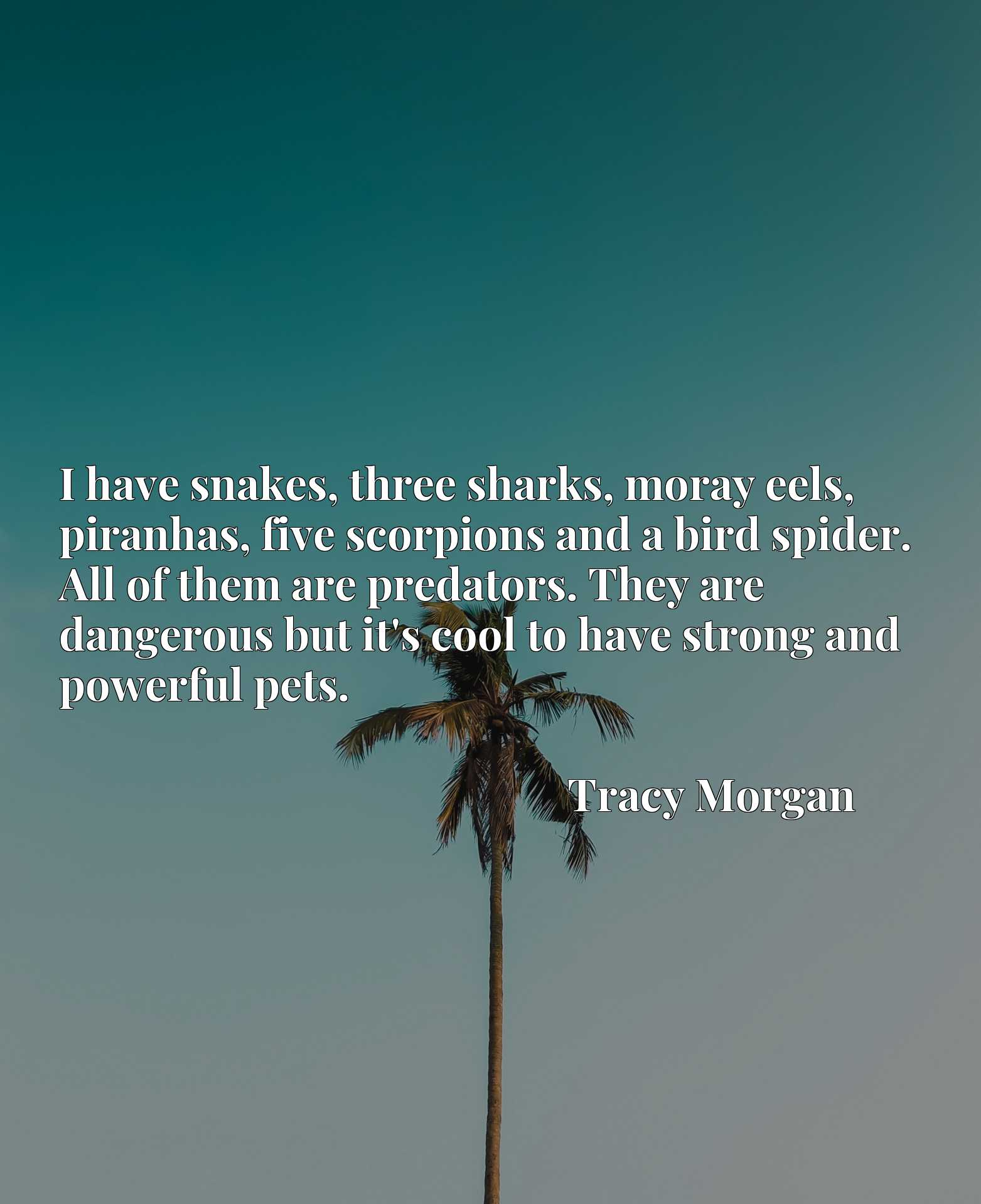 I have snakes, three sharks, moray eels, piranhas, five scorpions and a bird spider. All of them are predators. They are dangerous but it's cool to have strong and powerful pets.
