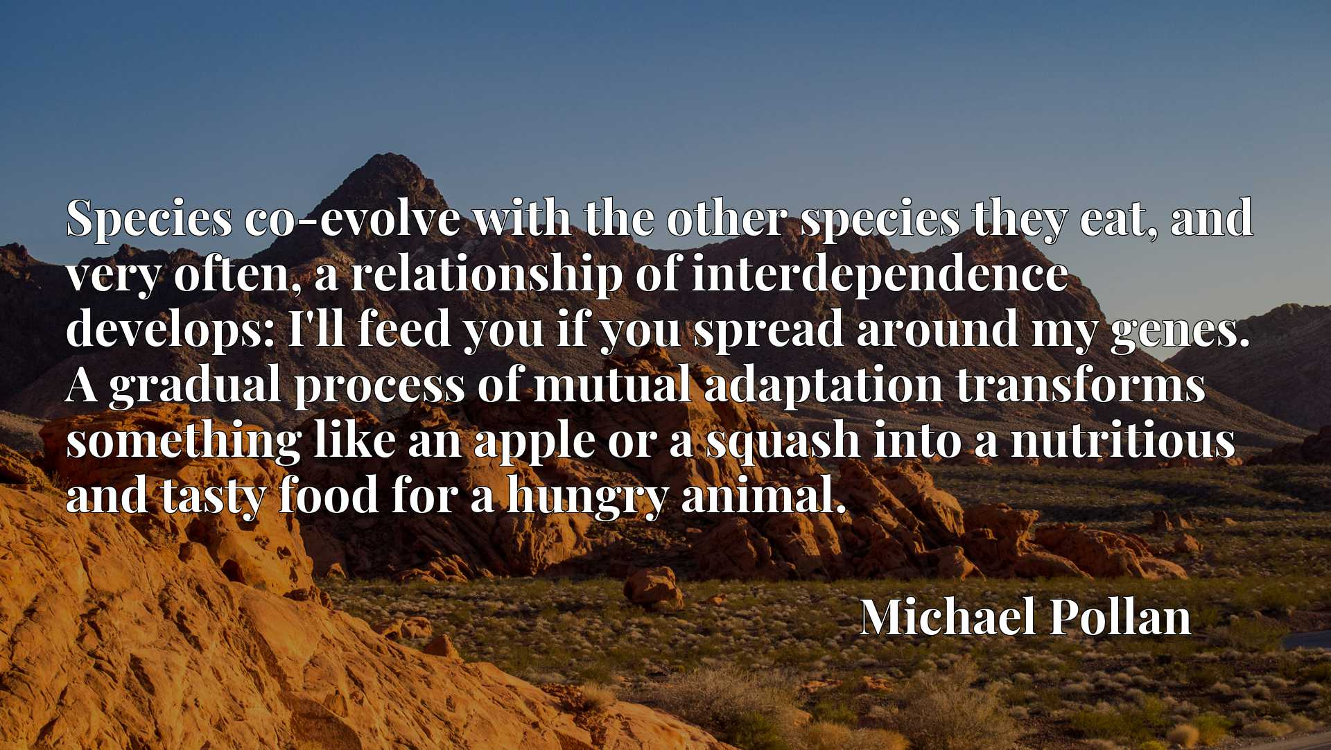 Species co-evolve with the other species they eat, and very often, a relationship of interdependence develops: I'll feed you if you spread around my genes. A gradual process of mutual adaptation transforms something like an apple or a squash into a nutritious and tasty food for a hungry animal.