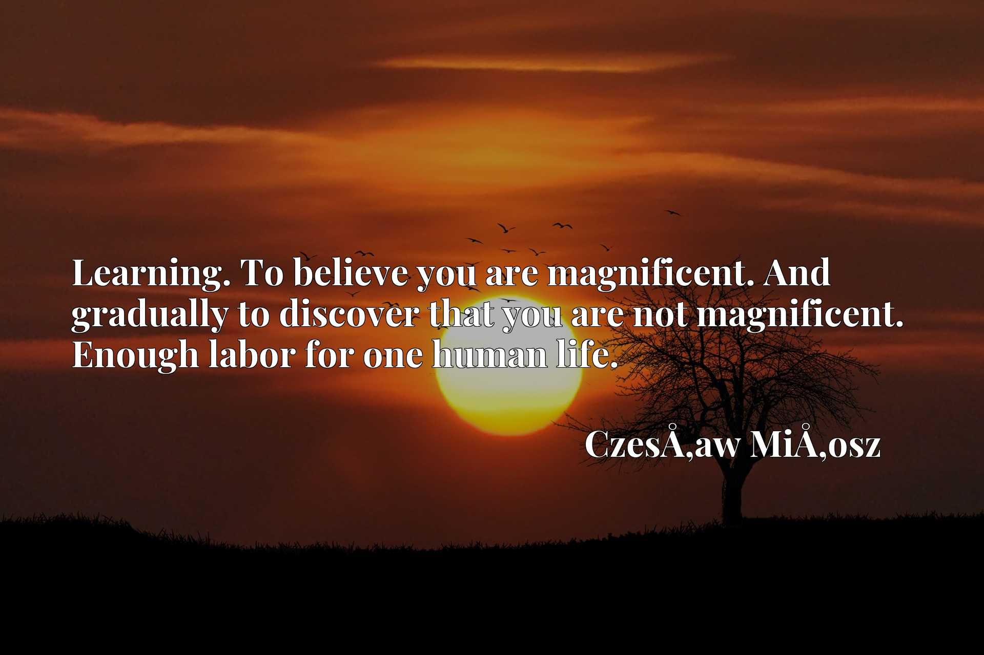 Learning. To believe you are magnificent. And gradually to discover that you are not magnificent. Enough labor for one human life.