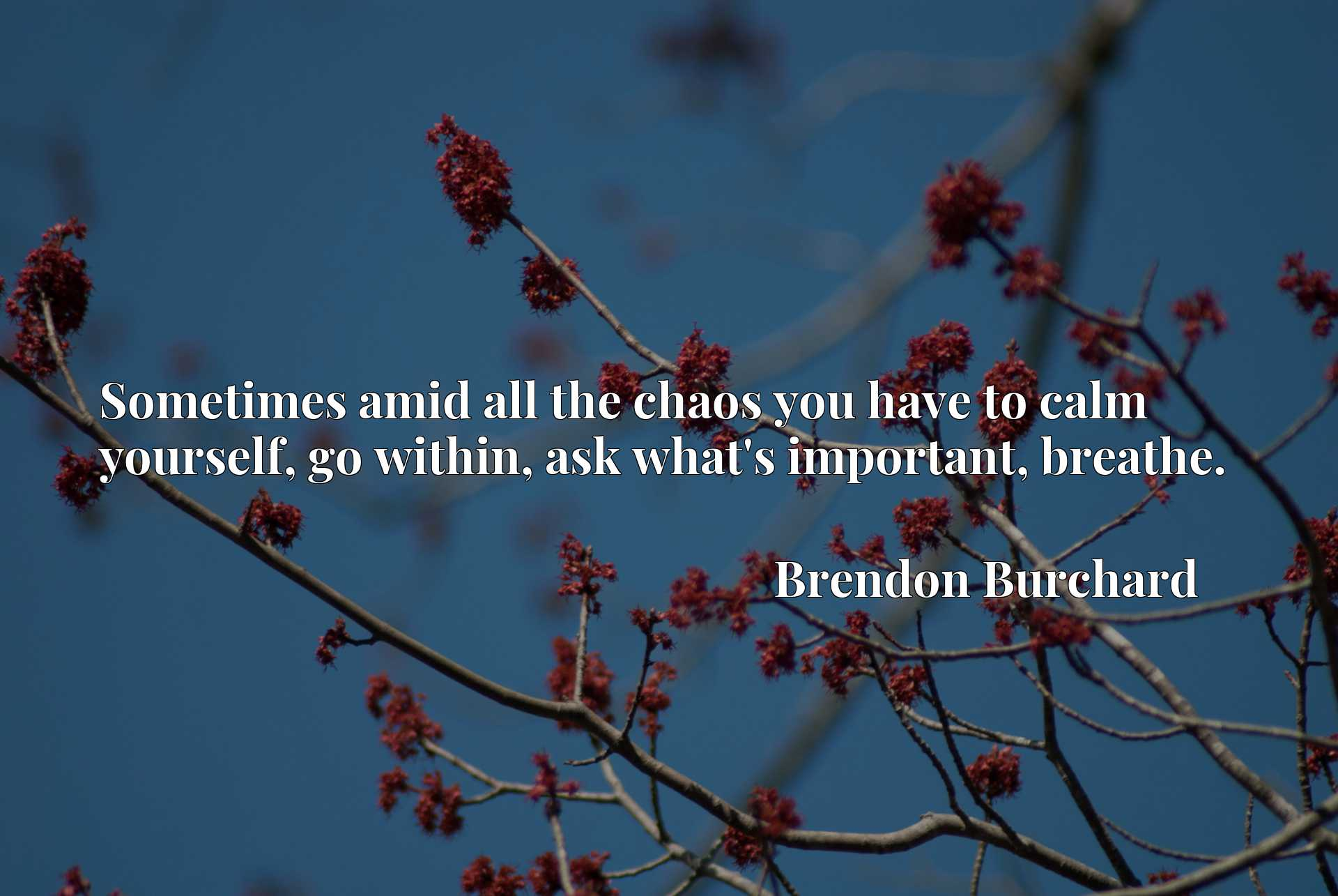 Sometimes amid all the chaos you have to calm yourself, go within, ask what's important, breathe.
