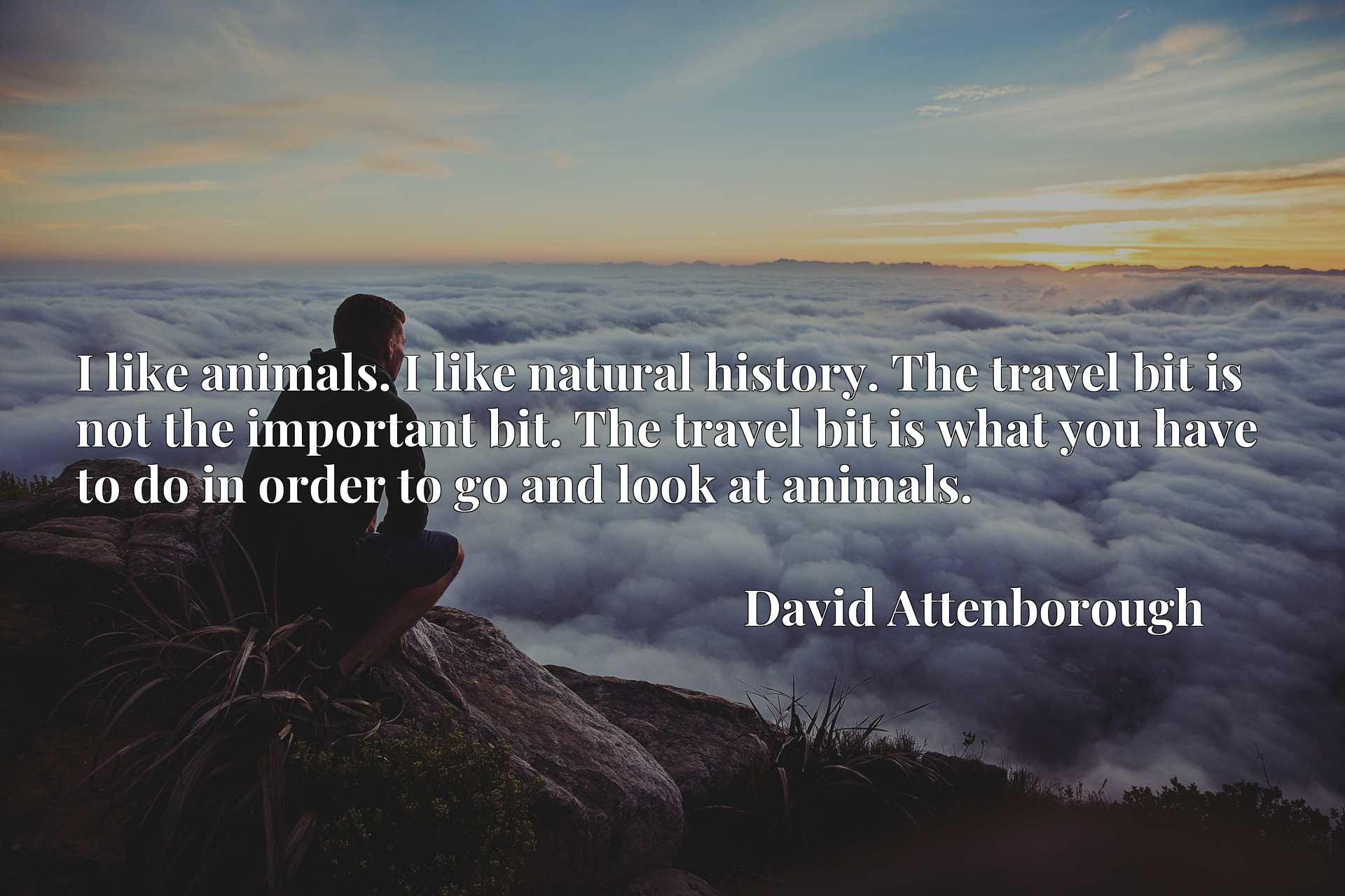 I like animals. I like natural history. The travel bit is not the important bit. The travel bit is what you have to do in order to go and look at animals.