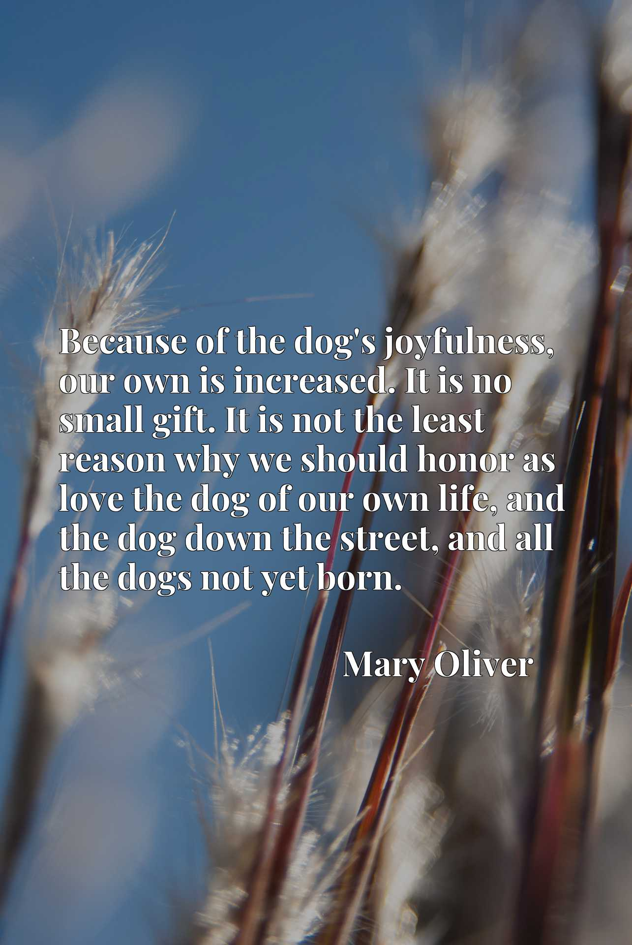 Because of the dog's joyfulness, our own is increased. It is no small gift. It is not the least reason why we should honor as love the dog of our own life, and the dog down the street, and all the dogs not yet born.
