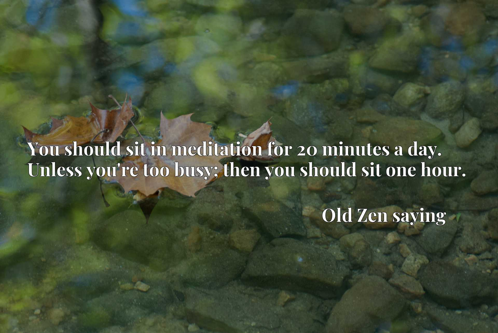 Quote Picture :You should sit in meditation for 20 minutes a day. Unless you're too busy; then you should sit one hour.