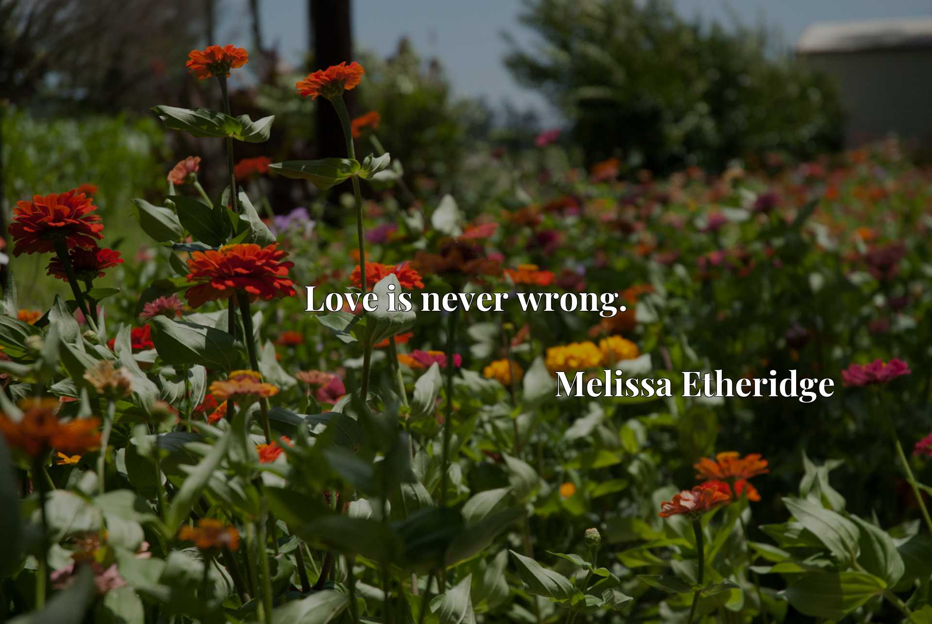 Quote Picture :Love is never wrong.