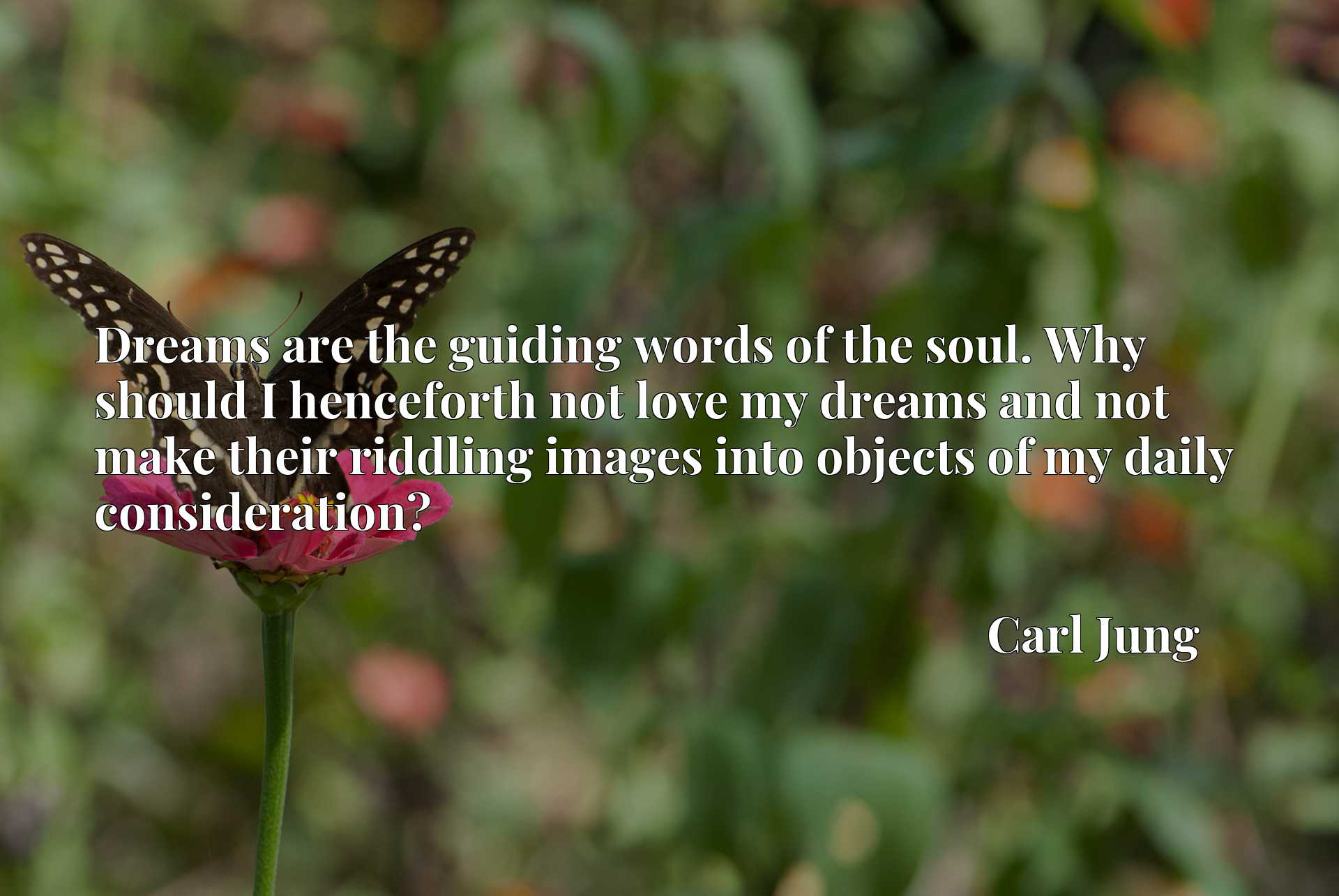 Quote Picture :Dreams are the guiding words of the soul. Why should I henceforth not love my dreams and not make their riddling images into objects of my daily consideration?