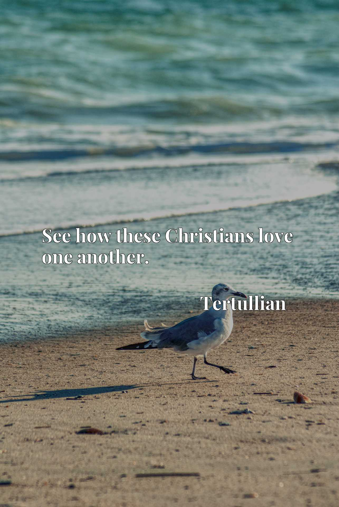 Quote Picture :See how these Christians love one another.
