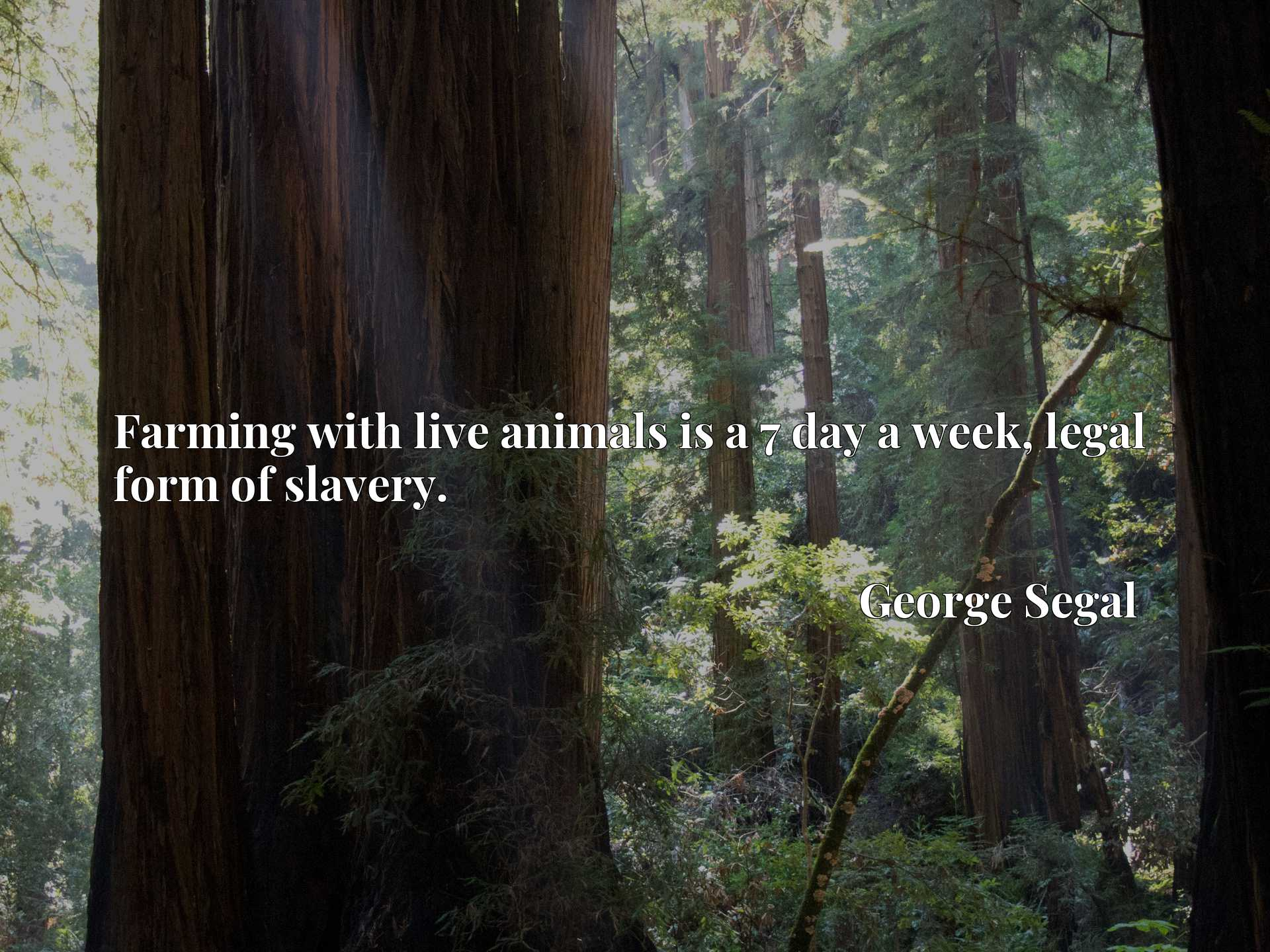 Quote Picture :Farming with live animals is a 7 day a week, legal form of slavery.