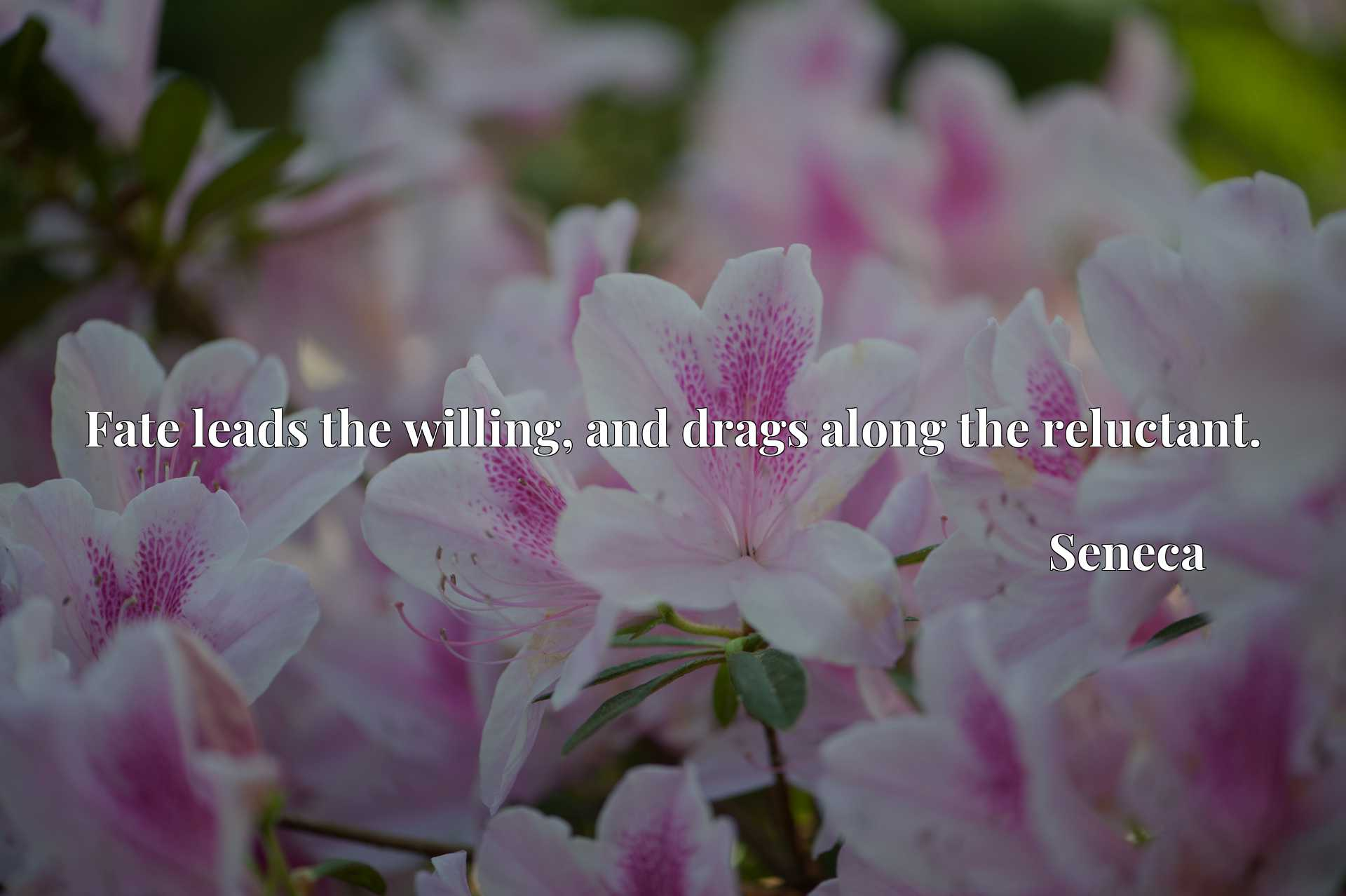 Quote Picture :Fate leads the willing, and drags along the reluctant.