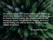 To such an extent does nature delight and abound in variety that among her trees there is not one plant to be found which is exactly like another; and not only among the plants, but among the boughs, the leaves and the fruits, you will not find one which is exactly similar to another.