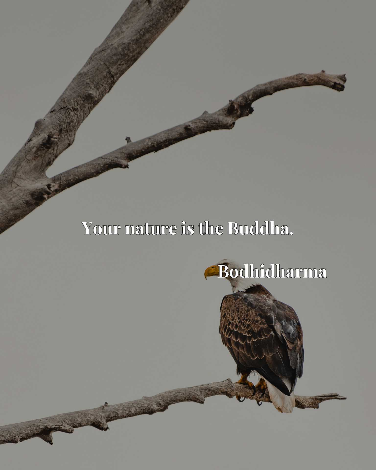 Quote Picture :Your nature is the Buddha.