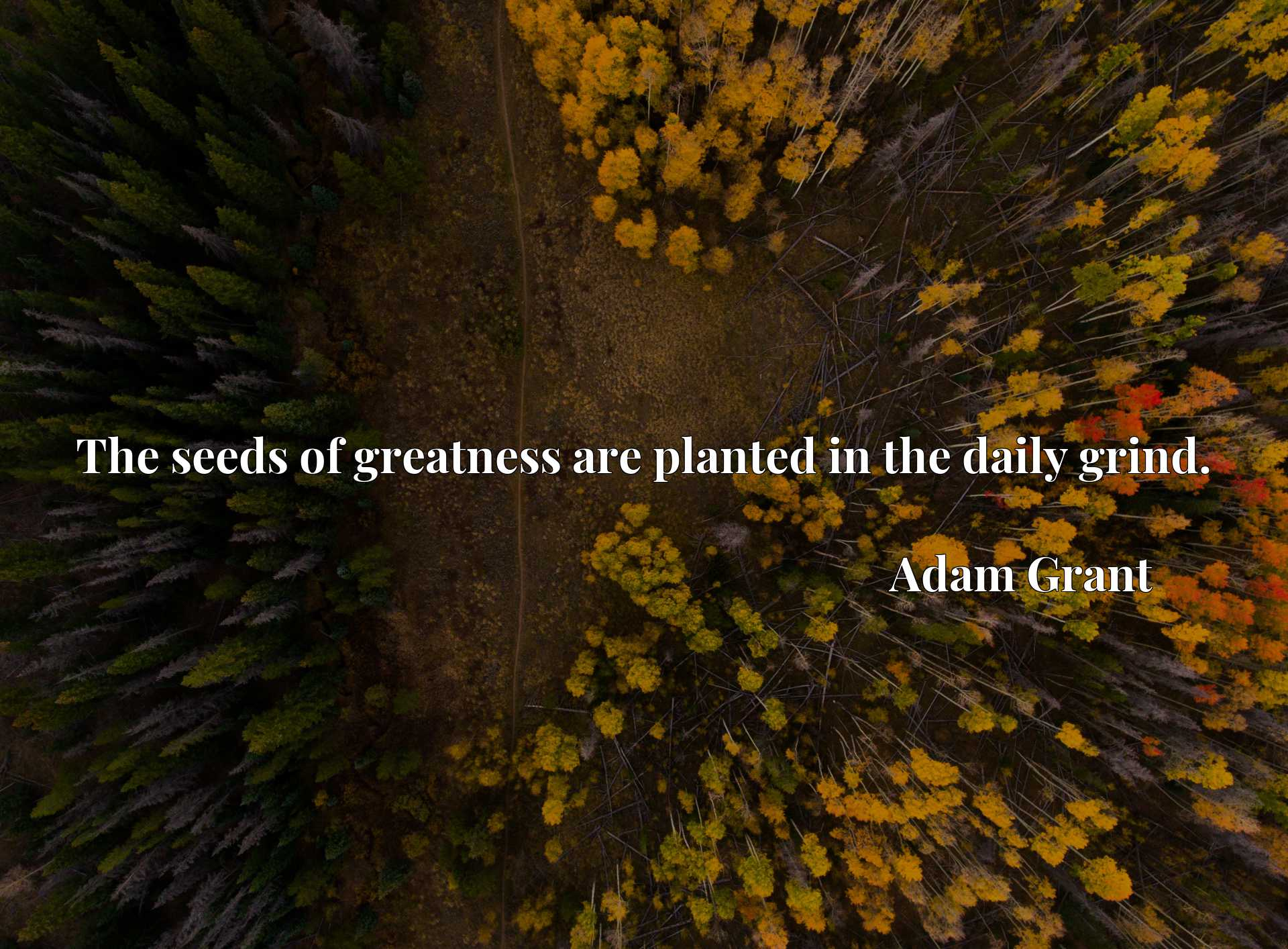 Quote Picture :The seeds of greatness are planted in the daily grind.