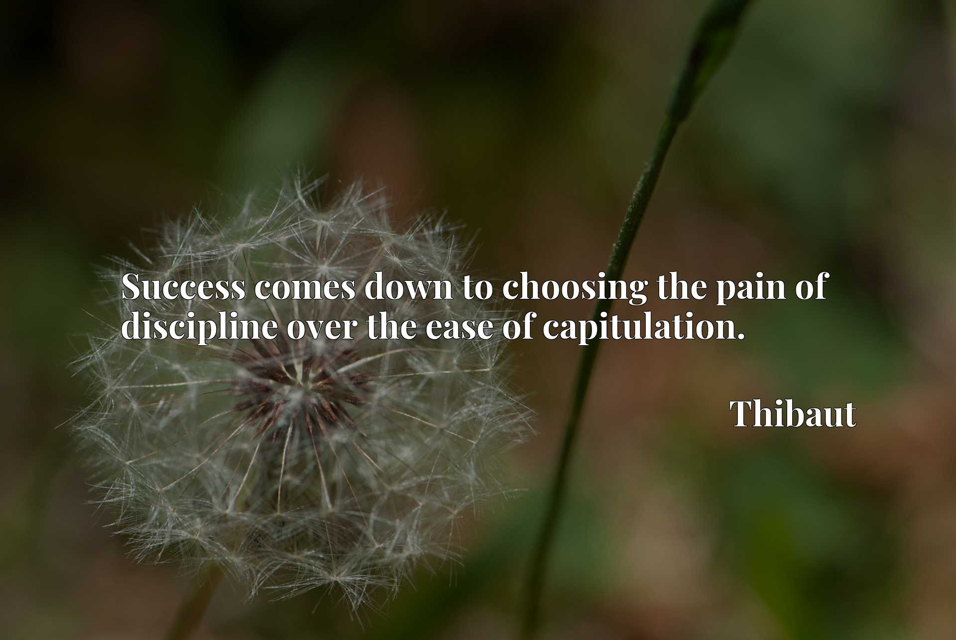Quote Picture :Success comes down to choosing the pain of discipline over the ease of capitulation.