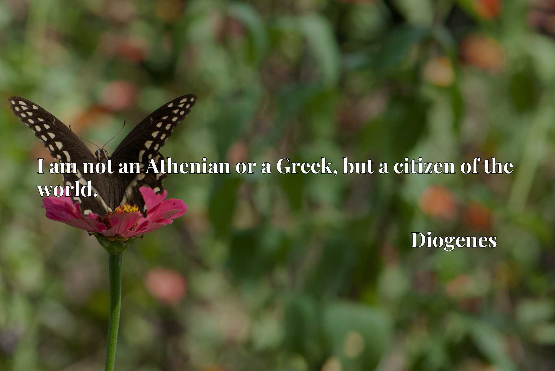 Quote Picture :I am not an Athenian or a Greek, but a citizen of the world.