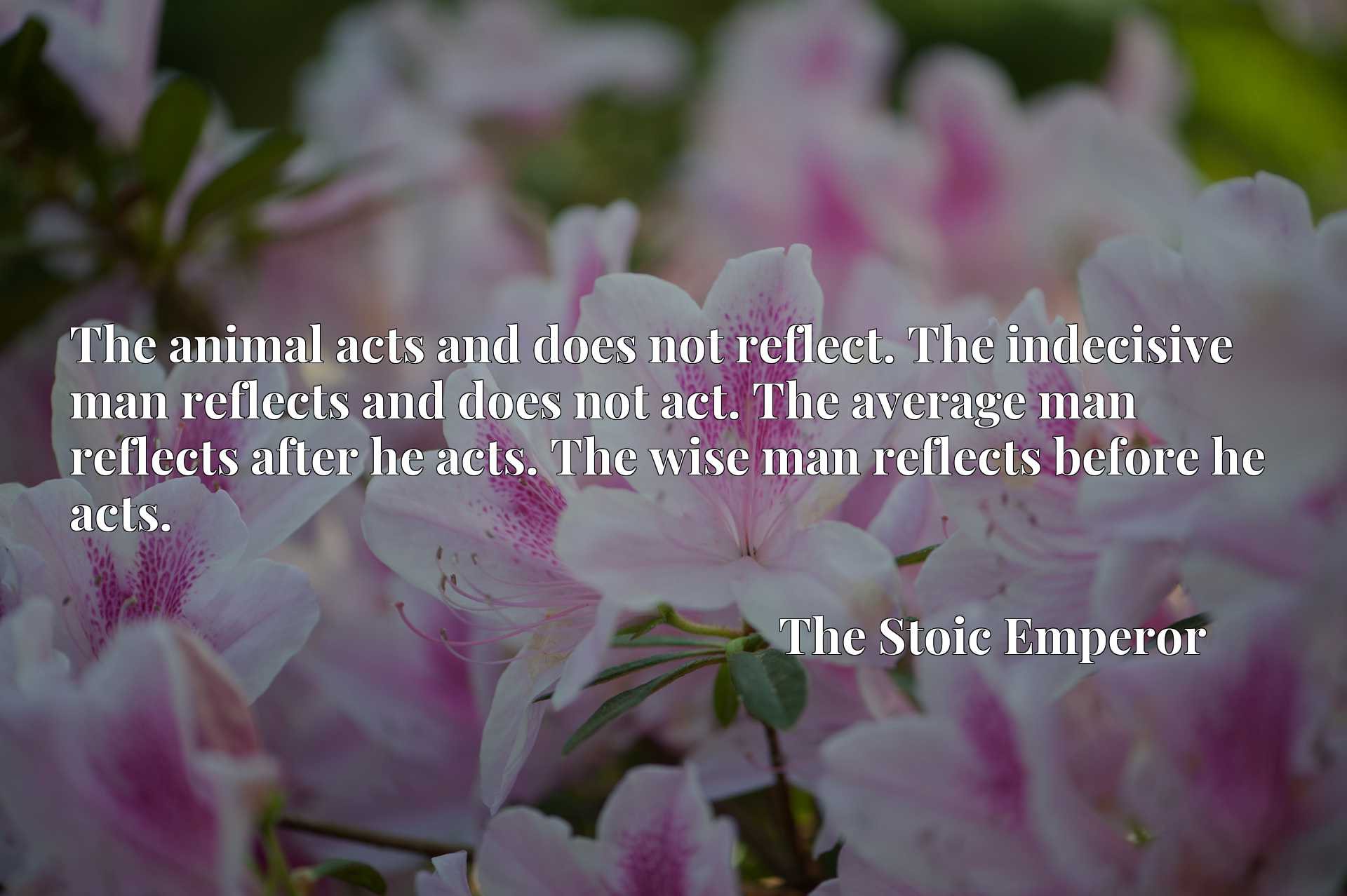 The animal acts and does not reflect. The indecisive man reflects and does not act. The average man reflects after he acts. The wise man reflects before he acts.